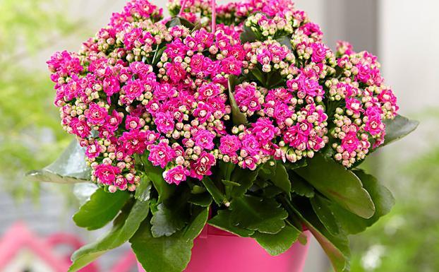 Que Plantas Y Flores Duran Mas Recopilamos 15 Variedades A Prueba