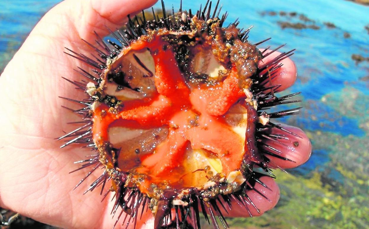 comida de mar de fondo rocoso