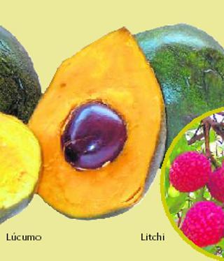 Los Nuevos Tropicales Que Buscan Su Sitio En El Campo Malagueño Diario Sur